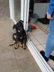 Brenda-süßes Hundekind sucht eine Familie
