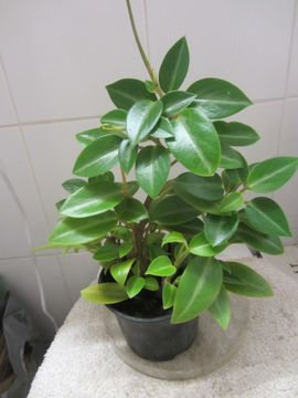Pflanzen - Zimmerpflanzen - Sonderangebot Eine Pflanzenkiste mit