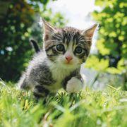 Suche 2 Katzenbabys w w