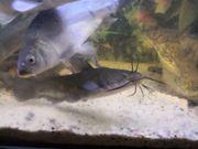 Teich Kaltwasser Fische