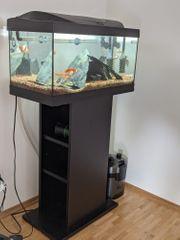 Aquarium mit viel Zubehör externem
