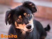 Bonita - kleines liebesbedürftiges Hundemädchen