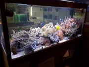 Whatsapp Gruppe Aquarium Meerwasser
