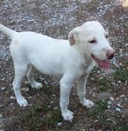 Kaja süßes weißes Hundekind braucht