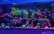 1000l Meerwasseraquarium