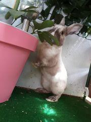 Kaninchen suchen liebevolles zuhause