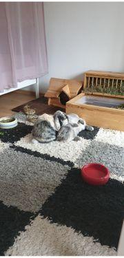 Wundervolles Kaninchen Duo mit Zubehör