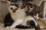 Freigänger-Katzenbaby FENJA geb 10 08
