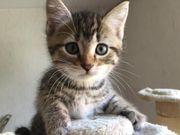 Babykatzentruppe sucht neues Zuhause