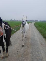 Ich verkaufe beistellpferd