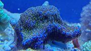 korallen wegen Umbau zu verkaufen