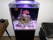 Meerwasseraquarium Blue Marine Reef 60