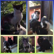 Wunderschöne Katzen und Kater suchen