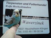 Vogelbörse am 11 04 2020
