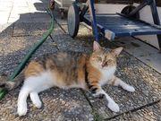 Frühlingskatze such ein neues Zuhause