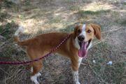 Pflegestelle Hundebetreuung