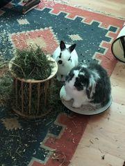 2 Wundervolle Kaninchen