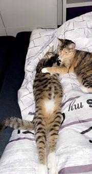 süßes Kätzchen in Liebevolle Hände