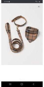 Set mit Hundehalsband Leine und