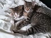 2 kleine Kätzchen suchen dringend