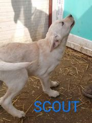 Scout sucht sein Zuhause