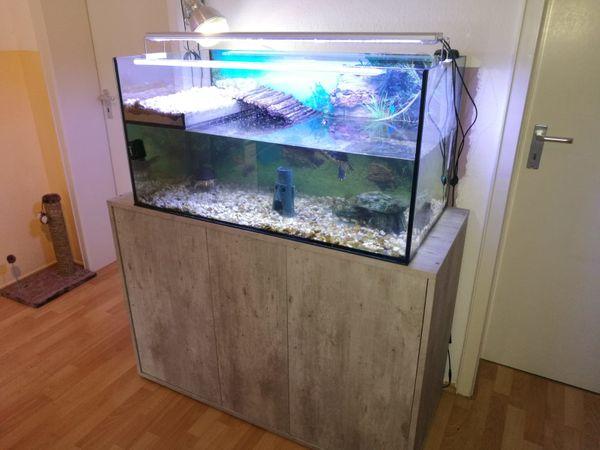 wasserschildkrten mit aquarium unterschrank und