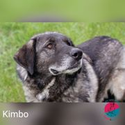 Kimbo - Faultier oder Hund das