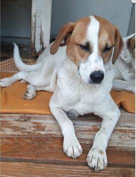 Stan, ein Handicap Hund mit großem Herzen