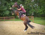 Biete Beritt für Problem Pferde