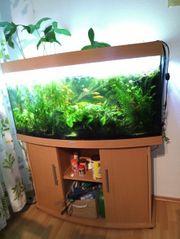 Juwel Vision Aquarium 260L mit