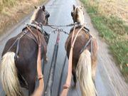 Classic-Pony Gespann