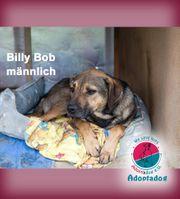 Billy Bob - meine Mama ist