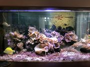 Meerwasser Aquarium mit Technik und