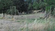 Wald oder Wiese oder Freizeitgrundstück