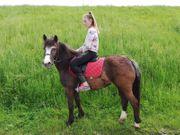 Pony-Stute zu verkaufen