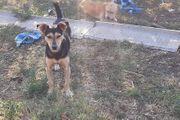 Doni sucht eine Familie Tierschutzhund