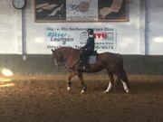 Reitbeteiligung Mensch sucht Pferd