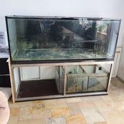 Meerwasseraquarium Aquarium ALLES MUSS WEG