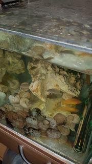 Verkaufen diverse Süsswasserfische