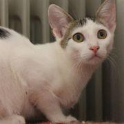 Liebes Katzenmädchen Djamila sucht ihre