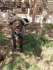 Pubi möchte ein Herzenshund werden