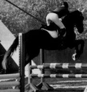 Zuverlässige Reiterin sucht Pferd