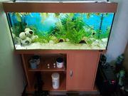 Aquarium von Juwel zuverkaufen