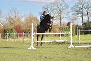Reitbeteiligungen gesucht Reiter sucht Pferd
