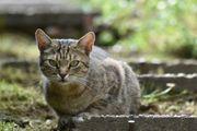Unkomplizierte schmusige Katzendame abzugeben