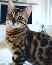 Vermisst Katze Luna