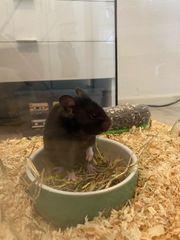 Hamster und Zubehör