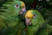 Familie gibt Papageien oder Kakadu