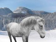 Connemara Mix pony