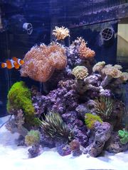 Aquarium Meerwasser komplett
